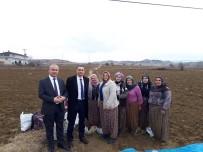 İBRAHIM ÇENET - Sarımsak Tarlasında Çalışanların Yevmiyesi 90 Lira Olarak Belirlendi