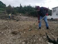 ORMAN İŞLETME MÜDÜRÜ - Ormana Yapılan Kaçak Binaların Yerine 200 Fidan