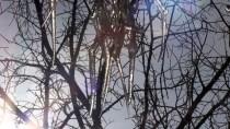 HAYDAR ALİYEV - Kars'ta Dondurucu Soğukların Etkisiyle Ağaçların Dalları Buz Tuttu