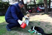 NOSTALJI - Korona Virüs Salgınında Sokak Hayvanları Unutulmadı