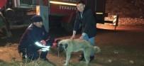 KURTARMA OPERASYONU - Konya'da Köpek Kurtarma Operasyonu