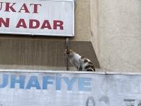 İTFAİYE ARACI - (Özel) İtfaiye Ve Mahalle Sakinlerinin Kedi İle İmtihanı