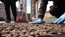 MUSTAFA YAMAN - Mardin Büyükşehir Belediyesi Sokak Hayvanlarına Sahip Çıkıyor