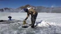 Buzla Kaplanan Balık Gölü Ekmek Kapıları Oldu