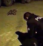Aç Kalarak Şehre Kadar İnen Tilkiyi Polis Ekipleri Elleriyle Besledi