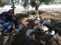MIGROS - Didimli Hayvanseverler Sokak Hayvanlarını Unutmadı