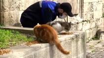 FATİH BELEDİYESİ - İstanbul'daki Belediyeler Sokak Hayvanlarına Sahip Çıkıyor