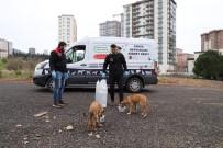 KARTAL BELEDİYE BAŞKANI - Kartal Belediyesi, Sokak Hayvanlarının Yanında