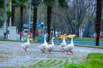 BURSA BÜYÜKŞEHİR BELEDİYESİ - Bursa'da Parklar Sağlık İçin Kapatıldı