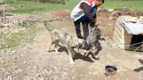 YAĞMUR SUYU - Havuza Düşen Kangal Köpeğini, Kardeşi Kurtardı