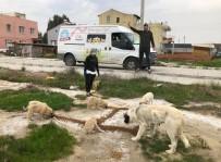 ÇIĞLI BELEDIYESI - Çiğli Belediyesi Sokak Hayvanlarını Unutmadı