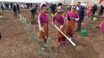 MUSTAFA KOÇ - Gaziantep'in Orman Varlığı Artıyor