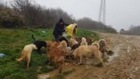 İNSANLIK DRAMI - Hayvanseverlerden Sokak Hayvanları İçin Yardım Çağrısı