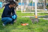 ERDAL İNÖNÜ - Muratpaşa'dan Sokak Hayvanlarına Mama Desteği