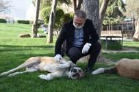 MEHMET BAYRAM - Büyükşehir Sokak Hayvanlarını Unutmuyor