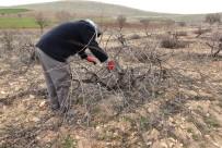 Mazıdağı'nda Bağ Budama Dönemi Başladı