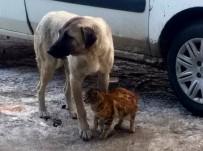 Kedi, Köpeği Annesi Sanıyor