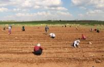Tarım İşçileri Sosyal Mesafe Kuralına Uyuyor