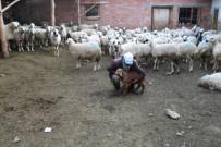 Koyun Otlatırken Sağlık Bakanı'na Şiir Yazdı