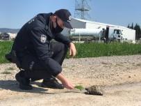 Gömeç'te Sokak Hayvanları, Kaplumbağa Ve Kuşlara Polis Şefkati