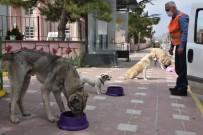 İnönü'de Sokak Hayvanları Aç Kalmayacak