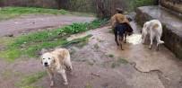 Topladıkları Köpekleri, Ormanlık Alana Bırakarak Ölüme Terk Ettiler
