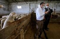 Küçükbaş Hayvan Üreticileri Devletten Yardım Bekliyor