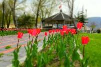 İnönü'deki Parklarda Çiçek Açtı