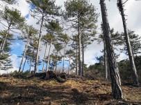 ORMAN İŞLETME MÜDÜRÜ - Balıkesir'deki Ormanlar Gençleşiyor