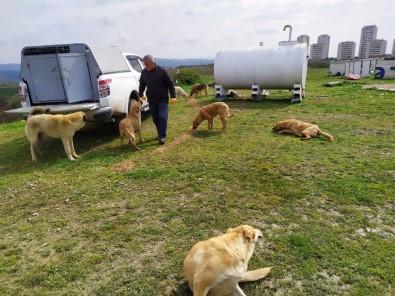 Gebze'de Sokak Hayvanları Unutmadı