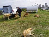 GEBZE BELEDİYESİ - Gebze'de Sokak Hayvanları Unutmadı