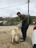KORUCUK - Sinop'ta Sokak Hayvanları Aç Kalmıyor
