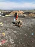 FERİBOT İSKELESİ - Sokak Hayvanları Unutulmuyor