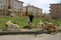 Her Gün, Sokak Köpeklerini Besliyor