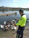 Kızılırmak Nehrinde Aç Kalan Kazları Polis Besledi