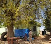 Polateli İlçesinde 236 Kişiye Bin TL Ödeme Yapıldı