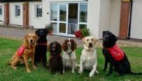 UMUTLU - Yarım saniyeden az bir sürede tespit edilecek! Koronaya karşı köpekler devrede...