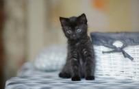 KÖPEK - O ülkede korkunç iddia: Koronaya çare diye siyah kedileri...