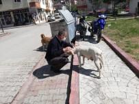 Özel İzinle Sokak Hayvanlarını Besliyorlar