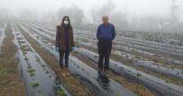 Alaçam'da Çilek Yetiştiriciliği Teşvik Ediliyor