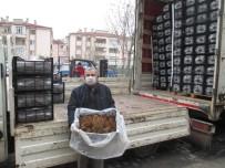 EYLEM PLANI - Tarım Şehri Amasya'da Çilek Yetiştiriciliğine Destek