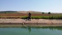 Bozova'da Kanala Düşen Köpek Kurtarıldı