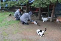 KAĞITHANE BELEDİYESİ - Kağıthane'de Sokak Hayvanları Unutulmadı