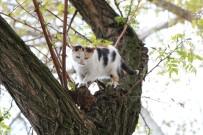 MAHSUR KALDI - Ağaçta Mahsur Kalan Kediyi İtfaiye Kurtardı