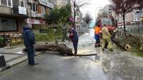 MECIDIYEKÖY - Mecidiyeköy'de Fırtınanın Etkisiyle Devrilen Ağaç Yolu Trafiğe Kapattı