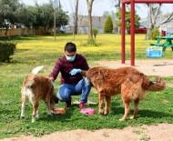 ERDAL İNÖNÜ - Muratpaşa 106 Noktaya Mama Bırakıyor