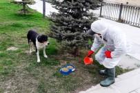 SOKAK HAYVANLARI - Bayburt'ta Sokak Hayvanları Unutulmuyor