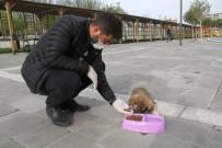 SOKAK HAYVANLARI - Bismil Belediyesi Sokak Hayvanlarını Unutmadı