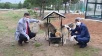 GENEL SEKRETER - DPÜ Kampüsündeki Hayvanlara Mama Verildi
