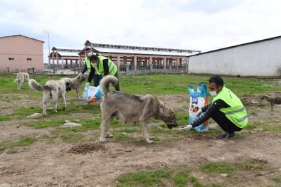 Muş Belediyesi Sokak Hayvanlarını Sahipsiz Bırakmıyor